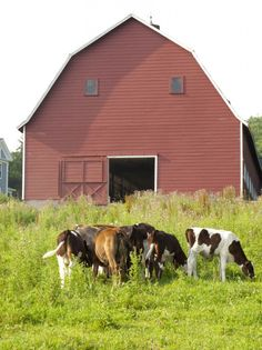 Cattle barn in the Berkshire Mountains. Photo by Martha on her brooklynfeed blog.