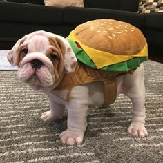 Hamburger Bulldog Halloween Dog Costume