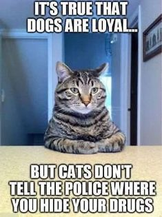 30 Cat Memes To Guarantee You Have A Fantastic Caturday - Funny Animal Quotes - - 30 Cat Memes To Guarantee You Have A Fantastic Caturday I Can Has Cheezburger? The post 30 Cat Memes To Guarantee You Have A Fantastic Caturday appeared first on Gag Dad. Funny Animal Jokes, Funny Cat Memes, Dog Memes, Cute Funny Animals, Funny Relatable Memes, Animal Memes, Funny Cute, Cute Cats, Hilarious Sayings