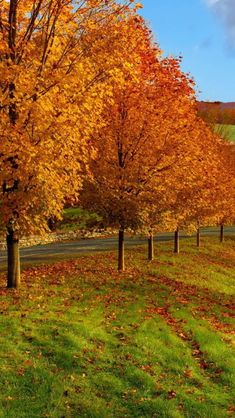 All sizes | autumn_trees_grass_84687_640x1136 | Flickr - Photo Sharing!