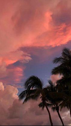 California palm trees 🌴