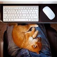 Procrastination Dog
