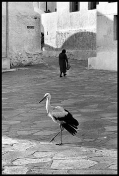 Greece, 1963 by Elliott Erwitt