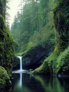 Punch Bowl Falls, Eagle Creek, Columbia River Gorge Scenic Area, Oregon, USA - move to the completed list. Need to start earlier to get to Tunnel Falls. Oh The Places You'll Go, Places To Travel, Places To Visit, Eagle Creek, Les Cascades, Columbia River Gorge, Oregon Travel, Amazing Nature, Beautiful Landscapes