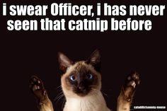 What catnip?