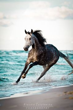 This reminds me of Shackleford Banks in NC. There are beautiful wild horses that live there. I got within inches from one. Freeing and terrifying. There was a connection made with nature that day. Never will forget it! All The Pretty Horses, Beautiful Horses, Animals Beautiful, Cute Animals, Cute Horses, Horse Love, Horse Photos, Horse Pictures, Equine Photography