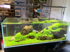 aquascaping like landscaping there are competitions