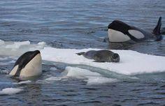 Brazilian Globetrotter | Expedição Antártida: uma viagem que não é para qualquer mochila