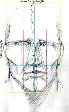 Facial proportions based on the size of an eye
