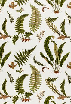 Botanical Fern Schumacher Fabric
