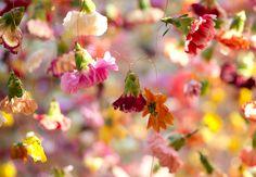L'Enthousiasme floral de Rebecca Louise Law (15)