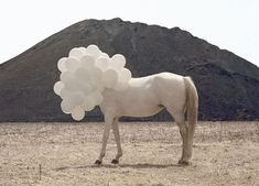 This poor horse! In some humane way, it might be interesting to mix animal/bubble. It could be an animal that is no longer of this earth. Surreal photo by Andrea Galvan of white horse with white balloons covering head. Surrealism Photography, Art Photography, Photography Gallery, Photography Projects, Outdoor Photography, Editorial Photography, Horse Balloons, White Balloons, Heart Balloons
