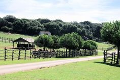 stables in zoo or national park Brijuni, Croatia