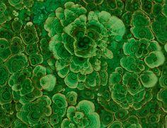 Flowering Malachite (closeup) | Flickr: partage de photos!