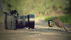 Animals and Camera