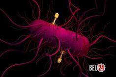 Эффективная взаимосвязь генномодифицированных вирусов и ВИЭ.. ( Наука@Science_Newworld). Команда ученых из Америки и Италии под чутким руководством профессоров манчестерского технологического института использовали вирусы в области возобновляемых источников энерги�