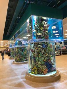 44 best building the impossible images in 2019 acrylic aquarium