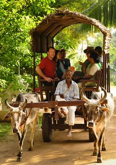 Image result for bullock carts India
