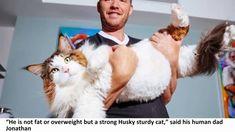 Meet Samson — the Biggest Cat in NYC!