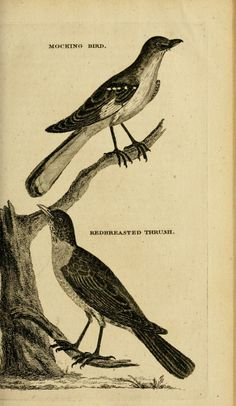 Pehr Kalm | Travels into North America: containing its natural history, and a circumstantial account of its plantations and agriculture in general, with the civil, ecclesiastical and commercial state of the country, the manners of the inhabitants, and several curious and important remarks on various subjects (1770-1771)