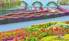 Jardín del Milagro en Dubai