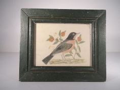 AAFA 19th c Watercolor of Robin Antique Bird Painting in Green Painted Frame
