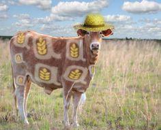 mucca confagricoltura