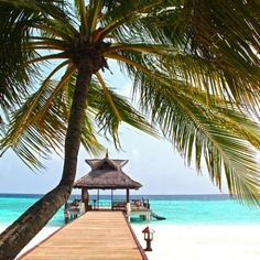Save up to on Best Hotel In Maldives. Compare and search best travel deals from millions of deals and find Cheap Flight To Male and Cheap Hotels In Maldives. Also get accurate Mqldives Travel Tips. To plan your trip hassle free. Last Minute Reisen, Cheap Hotels, Travel Deals, Travel Tips, Travel Hacks, Travel Advice, Budget Travel, Tropical Paradise, Tropical Vibes