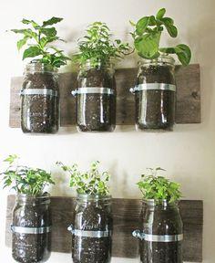 Especieros vegetales #Ideas para #decorar con #plantas #home_plants  #pots