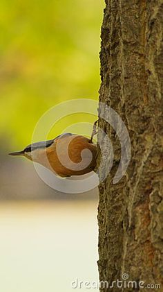 Small bird ready to fly