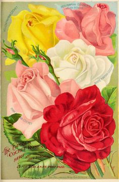 Our new guide to rose culture : 1907