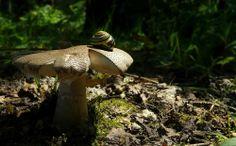 cogumelo natureza