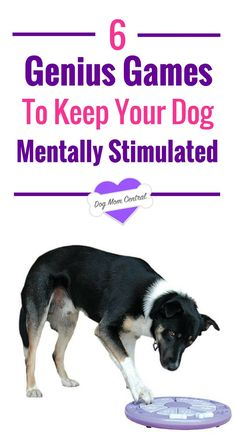 A key ingredient to having a happy and healthy dog is ensuring they have adequate mental stimulation. Here are six genius ideas you have to try!