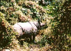 Elephant safari at Jaldhapara (Jaldapara) rhino sanctuary Photo Maps, Safari, National Parks, Wildlife, Elephant, Horses, Indian, Adventure, Future