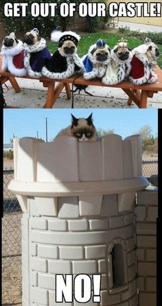LOL - Grumpy cat