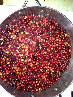 Browning Homestead at Red Fox Farm: Foraging: Chokecherries - How to make Chokeberry Syrup Hmmmm.wonder if we have any of these on our homestead. Edible Wild Plants, Edible Food, Wild Edibles, Survival Food, Medicinal Plants, Canning Recipes, Real Food Recipes, Herbalism, Berries