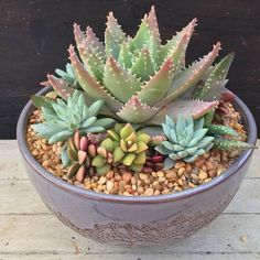 49 Cheap Succulent Plants Decor Ideas You Will Love