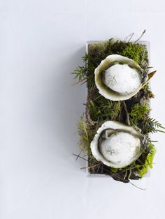 Oysters in the Bush. Fresh Oysters served under a light lemoned kawakawa freeze. so so nice Appetizer Buffet, Gourmet Appetizers, Tapas, Modernist Cuisine, Hotel Food, Fresh Oysters, Romantic Meals, Dessert For Dinner, Molecular Gastronomy