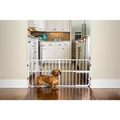 Size: 38 x 1 x 18 The Carlson Mini Tuffy is an amazingly versatile expandable pet gate with patented small pet door. This all-metal expandable is the first of its kind. Expanding inch wide and s Retractable Gate, Pet Door, Pet Gate, Dog Fence, Dog Care Tips, New Puppy, Dog Supplies, Doge, Small Dogs