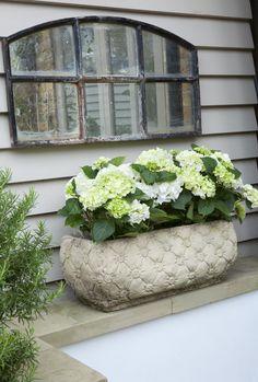Mooi de hortensia in een langwerpige bloembak.