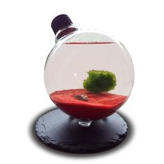 Boule de mousse de MC Coy MC COY Terrarium MC COY Aquarium MC