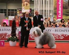 In perioada 16-19 mai 2013, in capitala Ungariei s-a desfasurat cel mai mare concurs de frumusete canina din lume: World dog show. Intr-o ambianta placuta si o organizare fara repros
