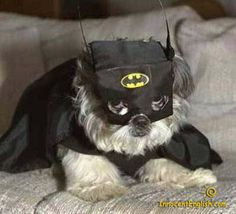 Da da da da da da da da....Bat Tzu