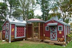 Taj ma-chicken coop