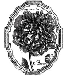 """LaBlanche Silicone Stamp 3.9""""X5.5""""-Framed Peony"""