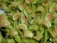 Pantone Perfection: The Color Palettes of Nature Nature Rose, Garden Of Earthly Delights, Fly Traps, Painting People, Carnivorous Plants, Pantone Color, Color Trends, Color Combos, Art Blog