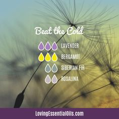 6 Diffuser Blends for Colds with Free Cheat Sheet by Loving Essential Oils Essential Oils For Colds, Essential Oil Diffuser Blends, Essential Oil Uses, Aromatherapy Diffuser, Relieve Sinus Pressure, Esential Oils, Diffuser Recipes, Bergamot, Lavender