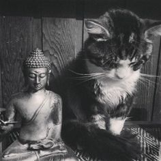 """Many do not know that we are here in this world to live in harmony. Those who know this do not fight against each other."" ~ The Buddha, The Dhammapada lis Kittens And Puppies, Cats And Kittens, Crazy Cat Lady, Crazy Cats, I Love Cats, Cool Cats, Neko, Chat Maine Coon, Cat Statue"