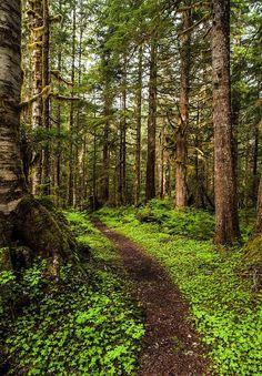 Rainforest path (Washington) by Mike Reid