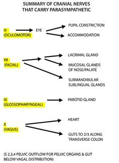 Bilirubin metabolism diagram anatomy physiology pinterest instant anatomy is a specialised web site for you to learn all about human anatomy of the body with diagrams podcasts and revision questions ccuart Choice Image